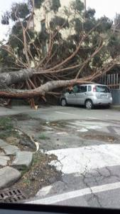 Scene di devastazione a Prato (foto tratta da Facebook) 2